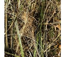 Element Outdoors™ Marsh